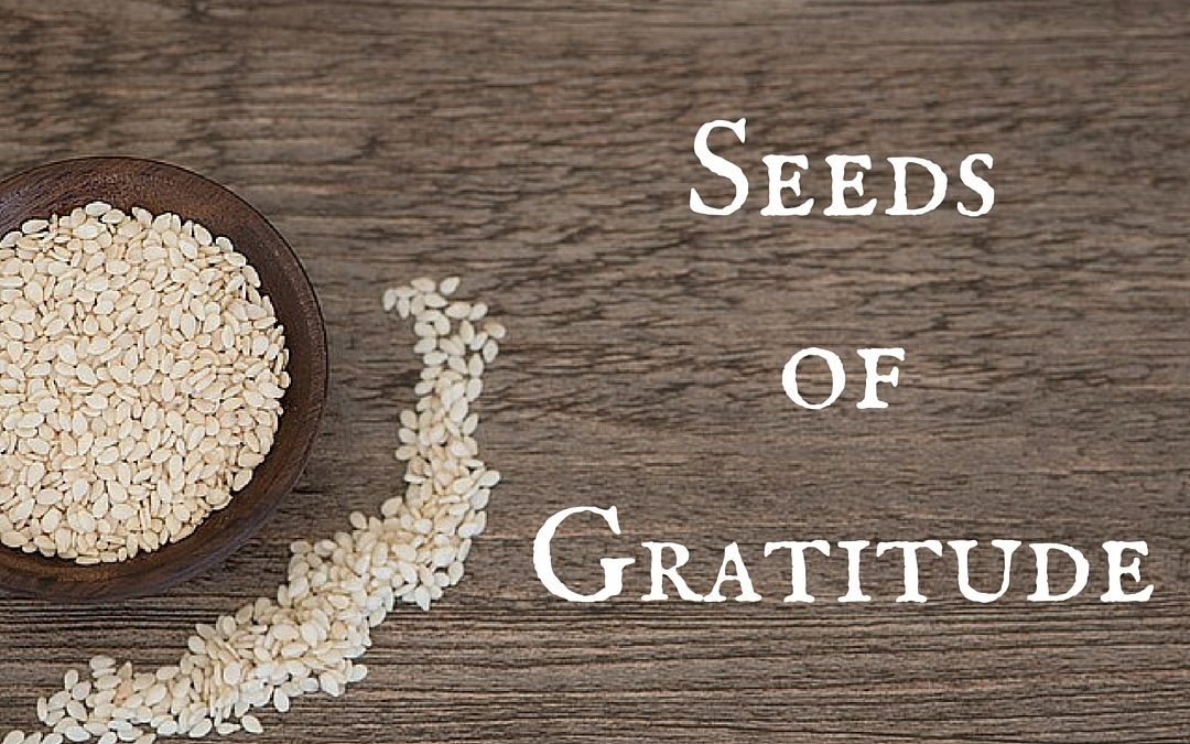The Seeds of Gratitude