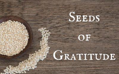 The Seeds of Gratitude